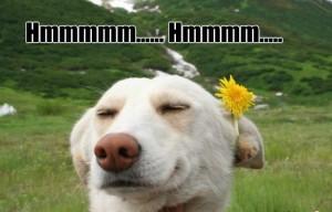 hippie-dog_o_293426
